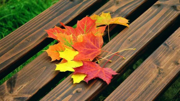 everyone loves viewing fall foliage but don't forget that means cleaning the gutters & other chores on your fall home maintenance checklists