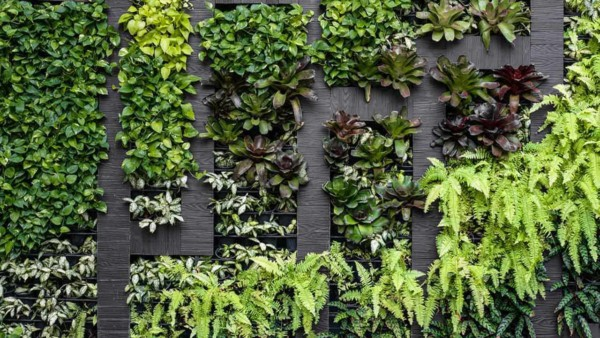 indoor gardens are another way to decorate your home with lots of benefits from cleaner air to fresh herbs & vegetables