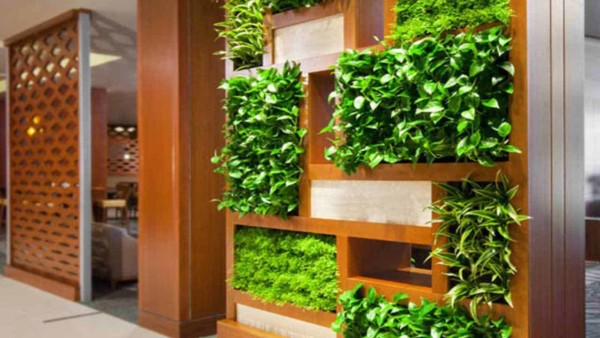 indoor gardens are gaining popularity as a way to grow your own food or filter chemicals out of your home's air
