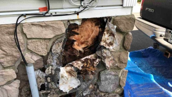 wood rot repairs aren't optional & should be done as soon as possible, before the damage expands & drives up repair costs