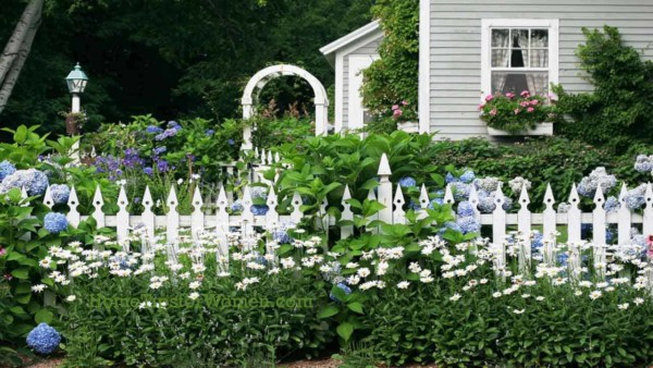 a picket fence is lovely when it's surrounded by flowers