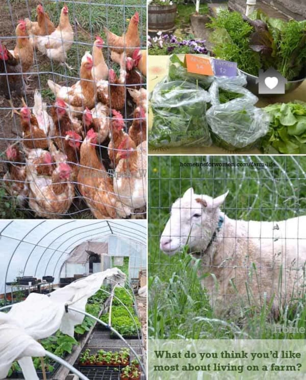 farm life often includes animals and/or growing your own veggies, fruit, etc