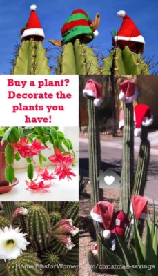 Christmas savings come when you're able to reuse things hear after year, like decorating plants you already own with Santa hats versus buying & throwing away Christmas flowers