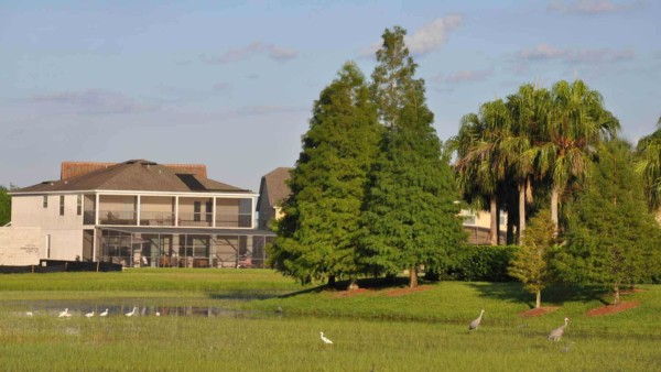 neighborhood wetlands support lots of birds to enjoy at home