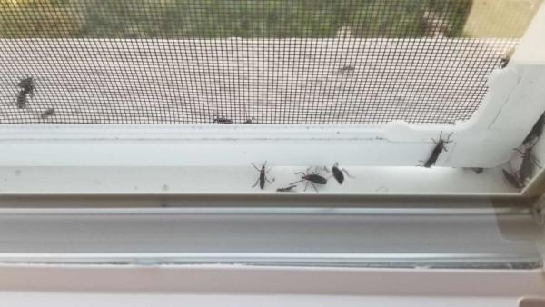 Cheap house windows (screens) letting bugs inside