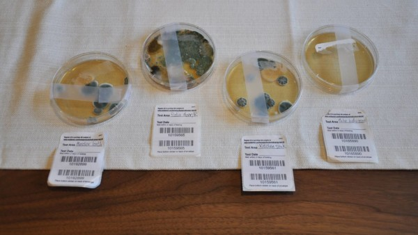 4 petri dishes, 3 showing quite a bit of mold growth in 48+ hours