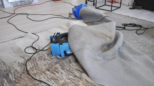 Fans drying carpet but not the pad underneath showing the experts are really dummies!