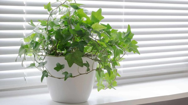 plant on window sill representing good indoor air quality to keep you healthy vs a house that needs mold remediation