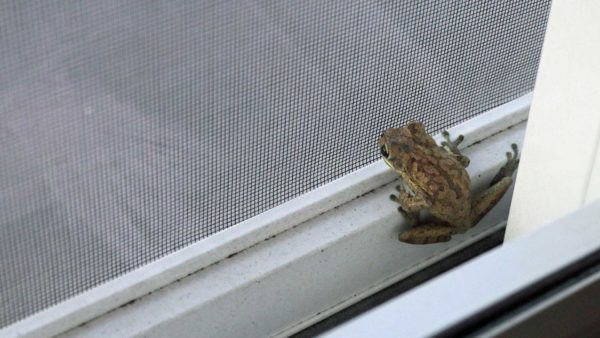 Frog & patio screen door, a common home repair for most homeowners ...